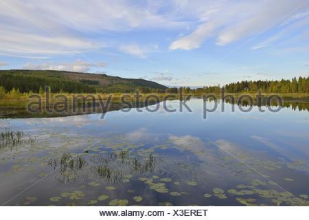 Mossatraesk Naturreservat - Stock Photo