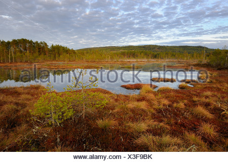 Swamp in the morning, Dalarna, Sweden, Scandinavia, Europe - Stock Photo
