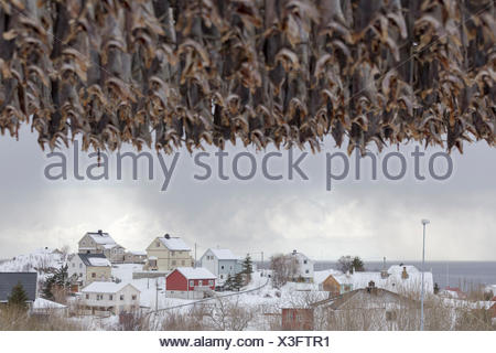 Scandinavian houses in snow against the overcast  sea shore in the Lofoten Islands, Norway - Stock Photo
