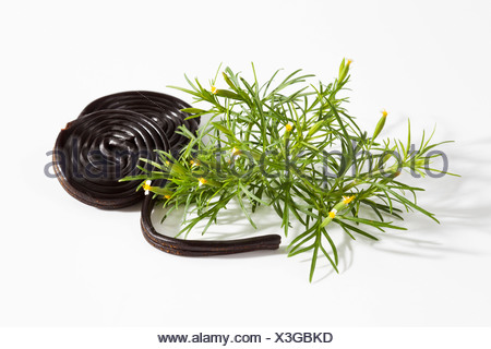 Liquorice herb with screw on white background, close up - Stock Photo