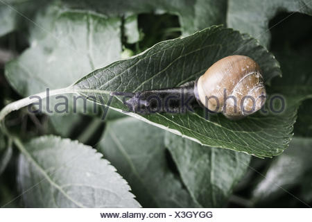 Snail in the nature - Stock Photo