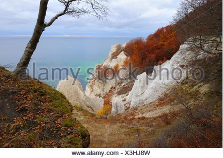 Autumn mood, chalk cliffs and Baltic Sea, Moen island, Denmark, Scandinavia, Europe - Stock Photo