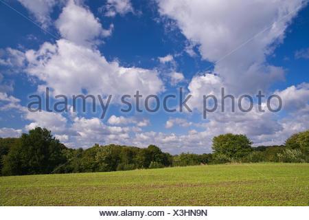 Germany, Schleswig - Holstein, field, - Stock Photo