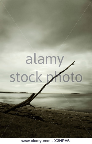 A single piece of wood washed up on the beach - Stock Photo