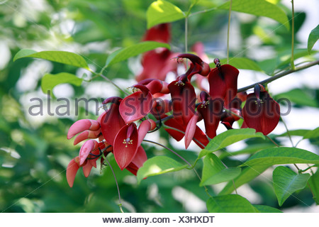 corall tree - Stock Photo