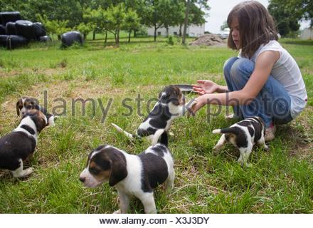 Caucasian 7 years old girl is sitting and playing with four puppies while choosing the one she will bring home. She is undecided the one she wants. - Stock Photo