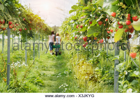 People walking in vegetable garden in greenhouse - Stock Photo