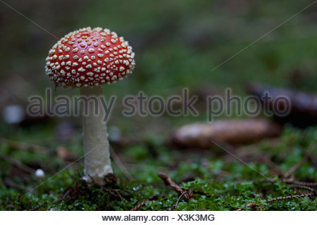 Close-up of red mushroom - Stock Photo