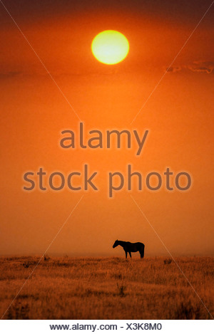 Horse, horses, Grand Teton, National Park, Wyoming, USA, United States, America, free, animal, landscape, prairie, sunset - Stock Photo