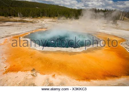 Morning Glory Pool, a hot spring in Upper Geyser Basin of Yellowstone National Park, Wyoming, with steaming water, a white limestone rim, and forest - Stock Photo