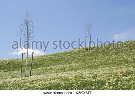 artifical heap at Lake Phoenixsee on the grounds of the former steelworks Hermannshuette - Stock Photo