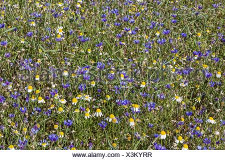 Wildblumenwiese mit unterschiedlichsten farbigen Blüten - Stock Photo