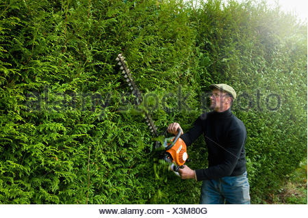A man trimming a tall hedge with a motorized hedge trimmer. - Stock Photo