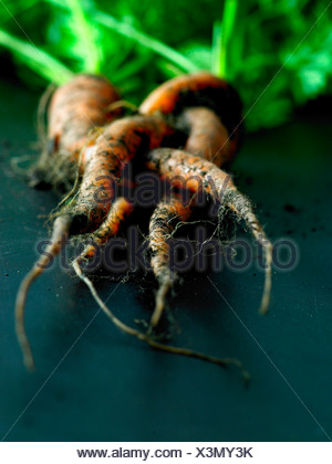 Organic carrots  with soil - Stock Photo