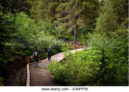 Hiking trail, Winner Creek, Chugach National Forest, Alaska, USA - Stock Photo