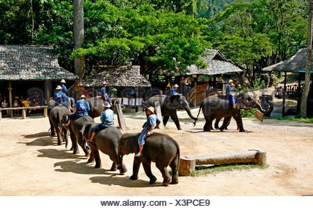 Elephant show, elephant farm, Mae Sa Valley, jungle, near Chiang Mai, Thailand, Asia - Stock Photo