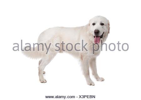 home animals - Stock Photo