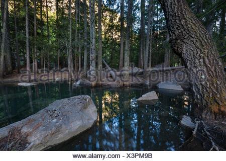 Primeval forest, forest, Derborence, Switzerland, Europe, canton, Valais, mountain lake, lake, - Stock Photo