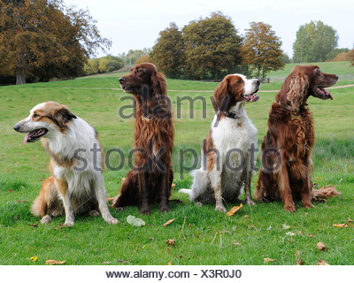 A group of dogs that are not obedient and are looking in different directions - Stock Photo