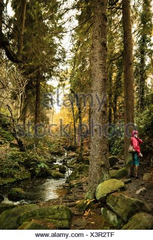 Woman Standing By Wyming Brook In Forest - Stock Photo
