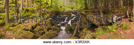 Kleine Ohe stream in the primeval forest, Bavarian Forest National Park, Bavaria, Germany, Europe - Stock Photo