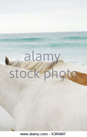 Horses on the beach - Stock Photo