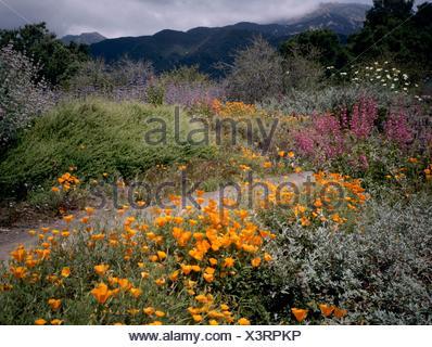 nature photo collection santa barbara botanic garden california usa gdn106825 stock photo - Santa Barbara Botanic Garden