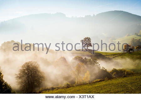 Solitary oak, English oak (Quercus robur) in autumn fog, Freiburg im Breisgau, Black Forest, Baden-Württemberg, Germany - Stock Photo