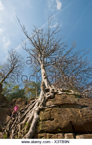 Girl climbing tree roots on rock face - Stock Photo