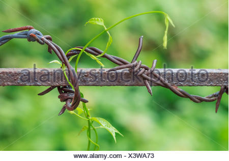 Barbed Wire in Nature Blurred Background - Stock Photo
