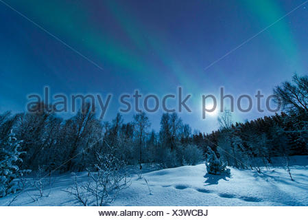aurora with moon above snowy forest scenery, Norway, Troms, Tromsoe - Stock Photo