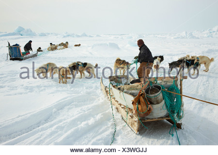 two Inuit hunters with dogsleds at Cape Tobin, Greenland, Ostgroenland, Tunu, Ittoqqortoormiit - Stock Photo