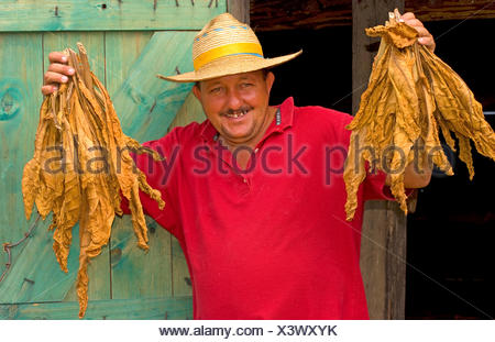 farmer proudly showing dried tobacco leaves, portrait, Cuba, Sierra del Rosario - Stock Photo