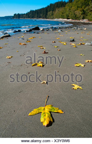 Sandcut beach trail, part of the Juan de Fuca trail on the West Coast of Vancouver Island, is a sandy protected beach - Stock Photo