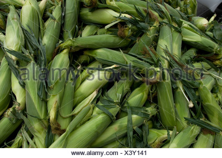 Sweet corn at the Farmer's Market in Lincoln's historic Haymarket district. - Stock Photo