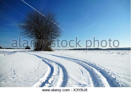 Winterlandschaft mit Bäumen und einem Kondensstreifen am blauen Himmel - Stock Photo