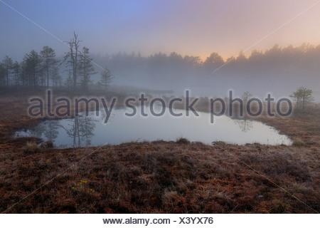 Swamp at dawn, early morning, Dalarna, Sweden, Scandinavia, Europe - Stock Photo