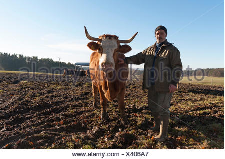 Farmer with Salers cow in pasture, Middle Franconia, Bavaria, Germany - Stock Photo