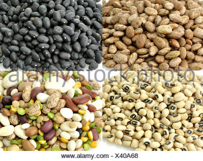 Raw Beans Collection - Stock Photo