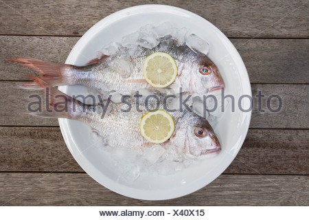 Red Snapper (Lutjanus campechanus) in a bowl, elevated view - Stock Photo