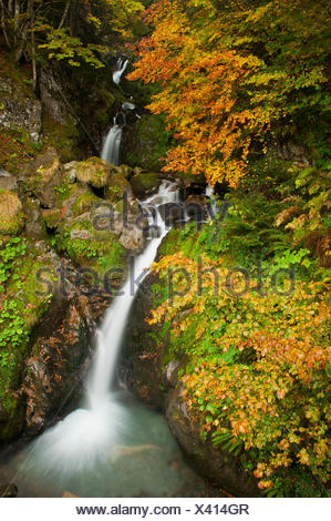 Waterfall among beech trees (Fagus sylvatica) in autumn, Parc National del Pyrenees, France. - Stock Photo