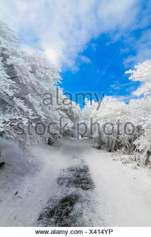 Japan, Chubu Region, Shimo-Ina, Aichi Prefecture, Mt Yuno after snow storm - Stock Photo