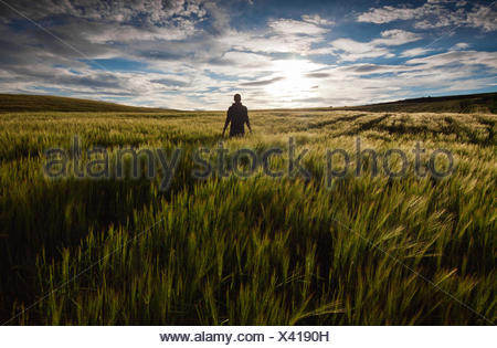 Rear view of a man standing in a green field at sunset - Stock Photo