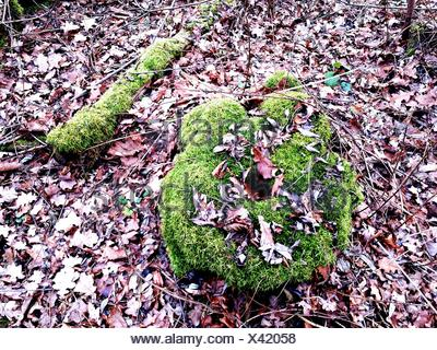 High Angle View Of Moss Covered Tree Stump In Forest - Stock Photo