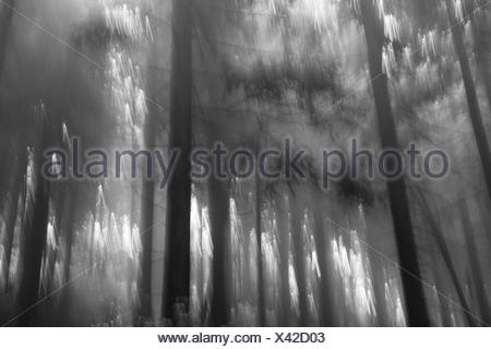 forest of a fary tail - Stock Photo