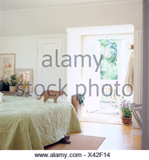 A cat lying under the bed, another one standing on the bed, Sweden. - Stock Photo
