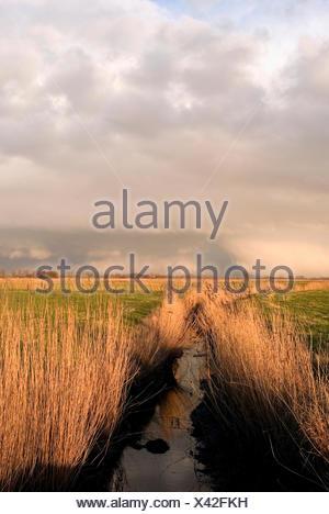 ditch in dyke foreland, Germany, Lower Saxony, Osterholz, Neuenkirchen - Stock Photo