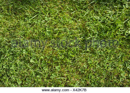 A section of grass lawn, view from above