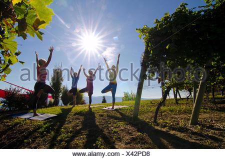 Yoga in the vineyard, Mt Boucherie Estate Winery, West Kelowna, British Columbia, Canada. - Stock Photo