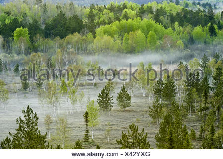 Spring forests on hillsides with morning mists in valley wetlands - Stock Photo
